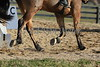 Eventing : 1907 galleries with 60257 photos
