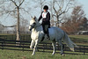 #02 Flying Casanova and Tracey at The Flying Cross Mini Horse Trial. 11.12.2011