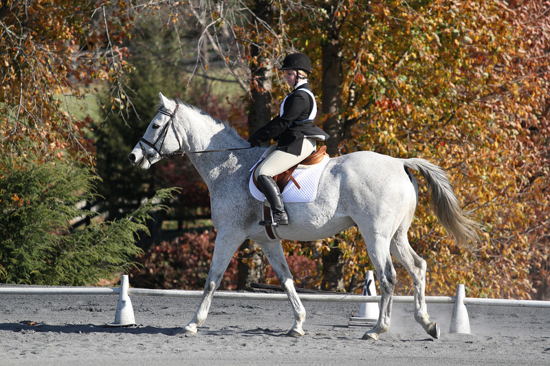 #15 Higgins and Emily at The Flying Cross Mini Horse Trial. 11.12.2011