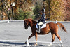 #16 All That Jazz and Paige at The Flying Cross Mini Horse Trial. 11.12.2011