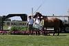 Lands End Farm Mini Horse Trial. 07.10.2011