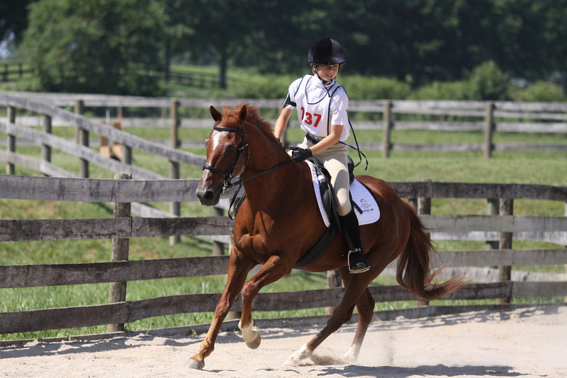 Mr. Little with Ashly Will up at The Lands End Farm Mini Horse Trial. 07.10.2011