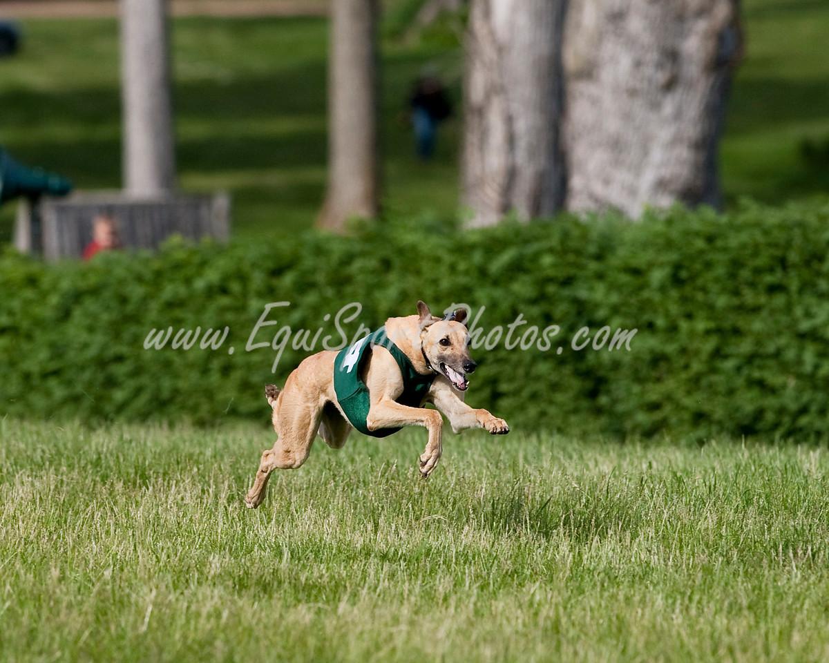 GreyhoundRace_05 17 2009_esp_m-6293