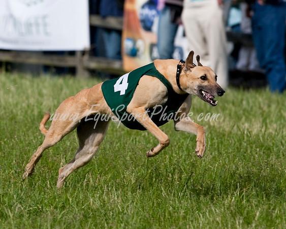 GreyhoundRace_05 17 2009_esp_m-6301