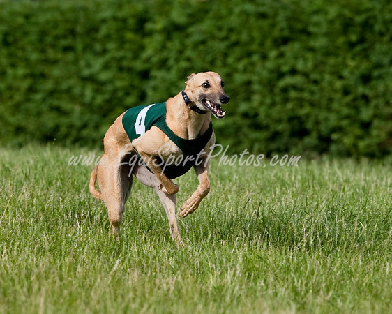 GreyhoundRace_05 17 2009_esp_m-6295