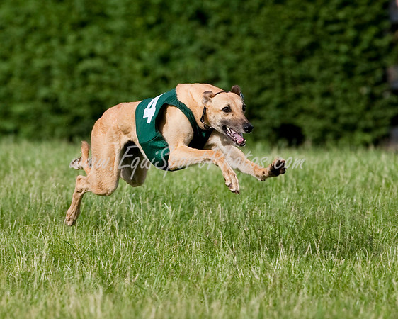 GreyhoundRace_05 17 2009_esp_m-6296