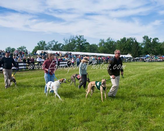 GreyhoundLeadIn_05 17 2009_esp_m-6213