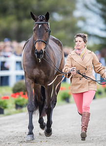Erin Sylvester and Mettraise in the Jog at the Land Rover Kentucky 3 Day Event 4.25.18.