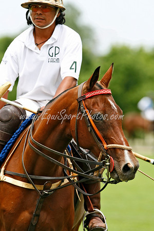 Lexington Polo