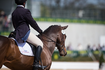 Tsunami and Sarah Cousins in their dressage test at Rolex 3-day on 4.25.2013