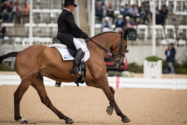 Ballynoe Castle RM and Buck Davidson in their dressage test on 4.26.2013