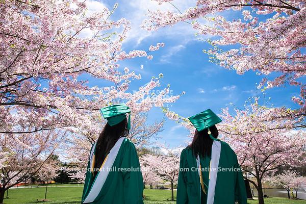 Cherry Blossoms Mason Pond.   Photo by:  Ron Aira/Creative Services/George Mason University