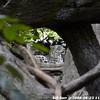 WJB_2009_06_23_105_1