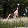 WJB_2009_06_23_163