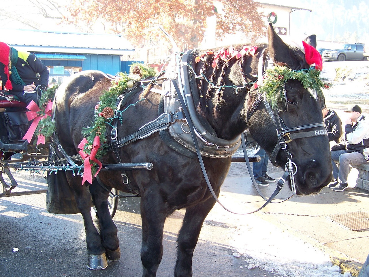 """The horse pulling the carriage got some Christmas decorations, too (plus a braided mane!). [Leavenworth, WA - December 2013 - <b><a target=""""_new"""" href=""""http://youtu.be/NqCqDCOY_tc"""">Watch my video here</a></b>]"""