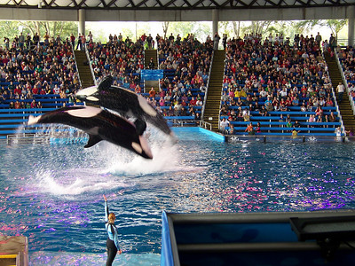SeaWorld San Antonio 2010