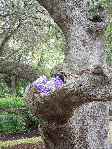 I loved how they used a gnarled limb of this tree as a planter.<br /> [SeaWorld San Antonio]