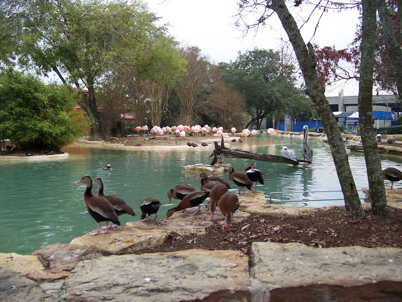 This pond featured a variety of waterfowl that you could feed for 25 cents per small handfull.  I must've spent two or three dollars.<br /> [SeaWorld San Antonio]