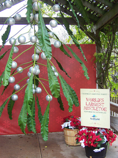 Later in the day, I saw lots of couples lining up in the Christmas Market to be photographed kissing under the Texas-sized mistletoe!<br /> [SeaWorld San Antonio]