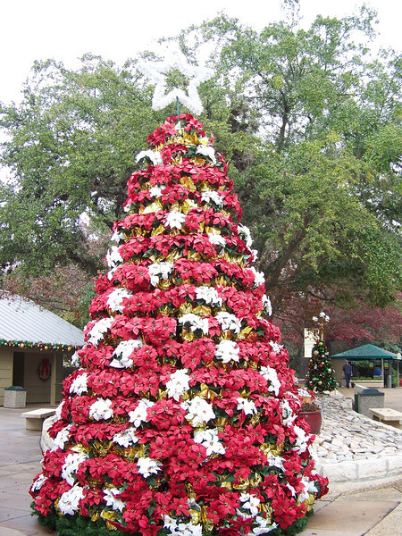 "A lovely poinsettia ""tree"" was in the Christmas market.<br /> [SeaWorld San Antonio]"