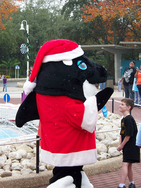 Why, it's Santa Shamu!  No, he doesn't have dandruff.  Look closely and you'll see that's actually fake snow falling (the soap-bubble variety).  It had to be fake, as the temperature neared 80 degrees this day (four days before Christmas!).<br /> [SeaWorld San Antonio]