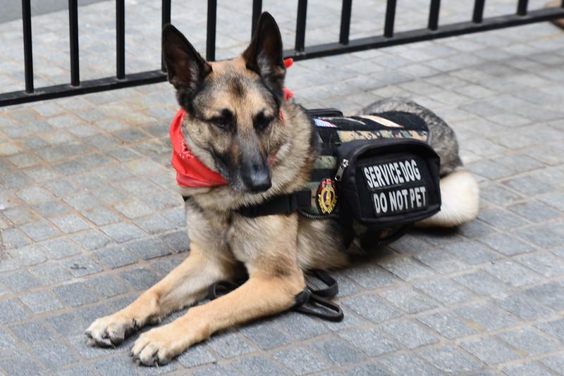 A_02 Service Dog