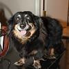 WA_3958 Dog
