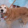 AWA_4000 dog