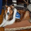 DSC_9639-Hero dog Holly