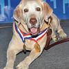 DSC_0035-Hero dog Gabe