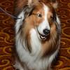 DSC_9583-Hero dog Holly