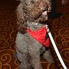 DSC_9581-Hero dog Stella