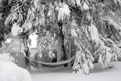 "D2G_5269sm This is my hammock in the back yard.  Now it's like Superman's ""Fortress of Solitude"" an the Arctic."