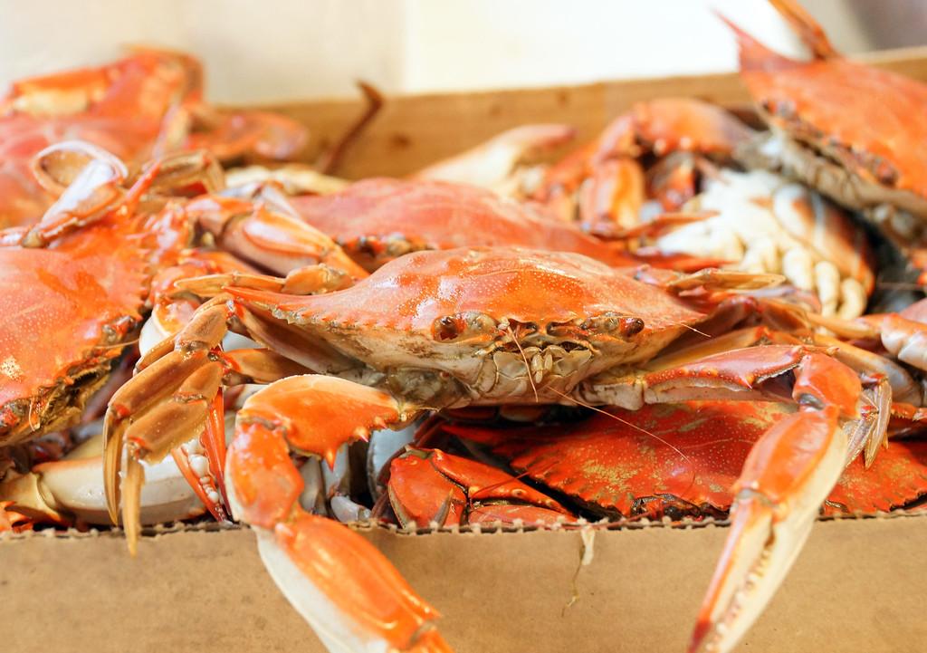 Crab Fest 2016 9242