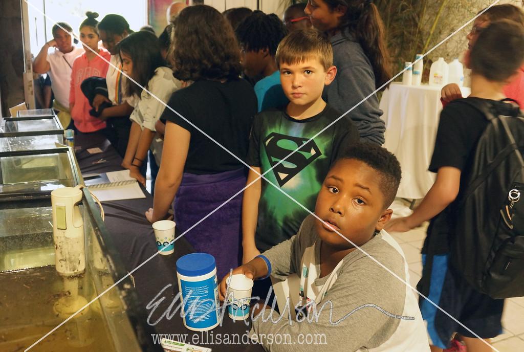 Magnolia Bayou Art Show 8723