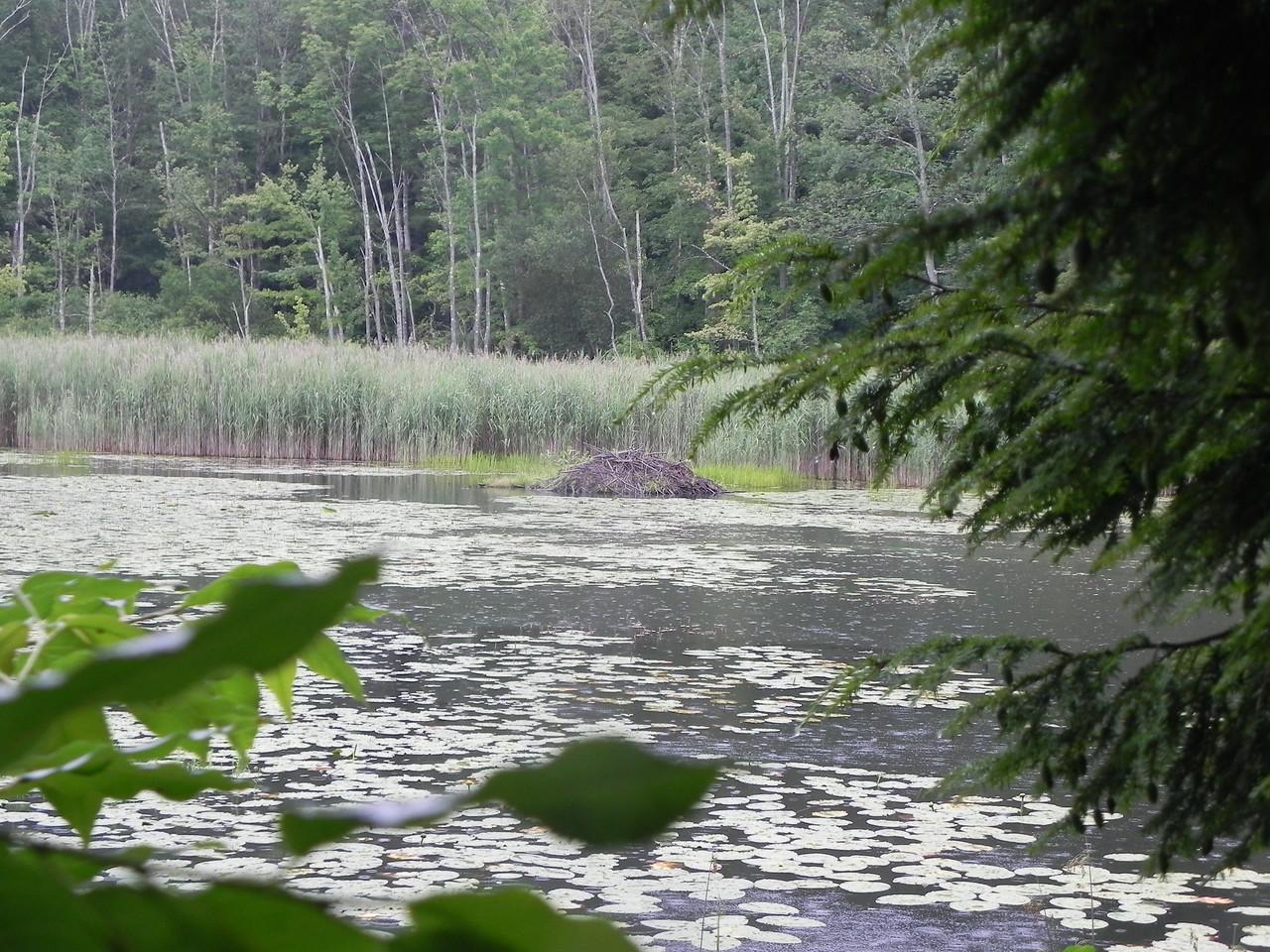 Beaver Lodge. Pleasant Valley Wildlife Sanctuary, Lenox, MA