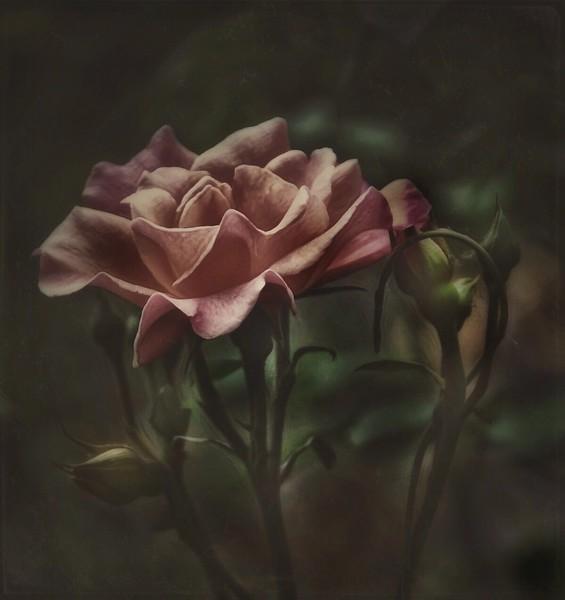 by Debbie Rinehart