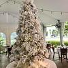 WA_9451 tree
