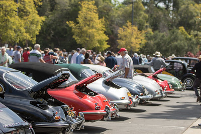 A view of a small part of the Concours field