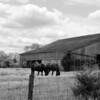 Firedawgphotos_Barns_May 2021-18
