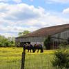 Firedawgphotos_Barns_May 2021-16