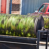 El Rey Farms brings in the fresh, green chiles of Hatch, NM for eager fans. Some people order many, many bushels, others just a few pounds. The smell of chiles roasting fills the air.   Like Tom Petty said, the waiting is the hardest part.