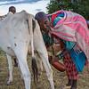 Maasai Milker