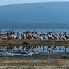 Pelican Island.