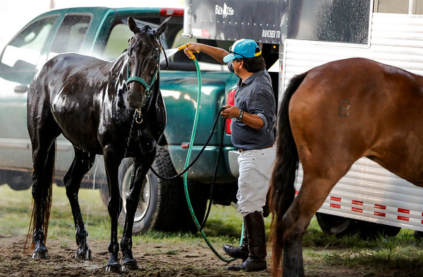 A horse gets hosed down to cool off after the match