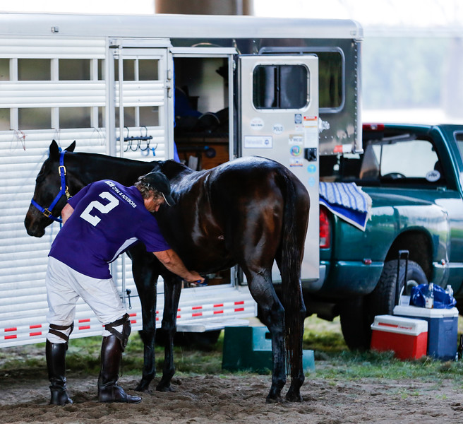 A polo player brushes one of the horses after the match