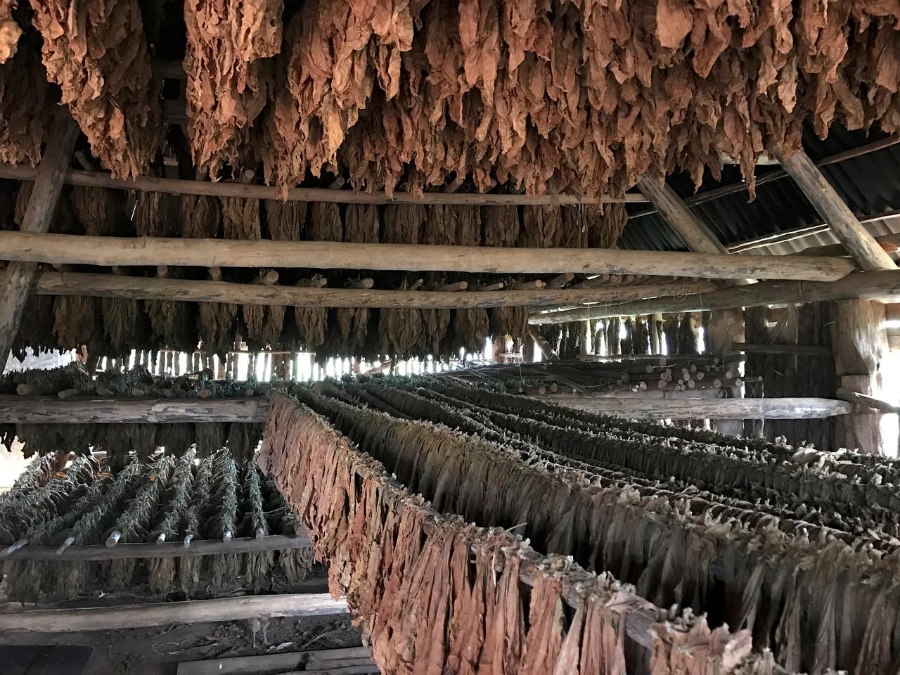 Tobacco house, Vinales, Cuba