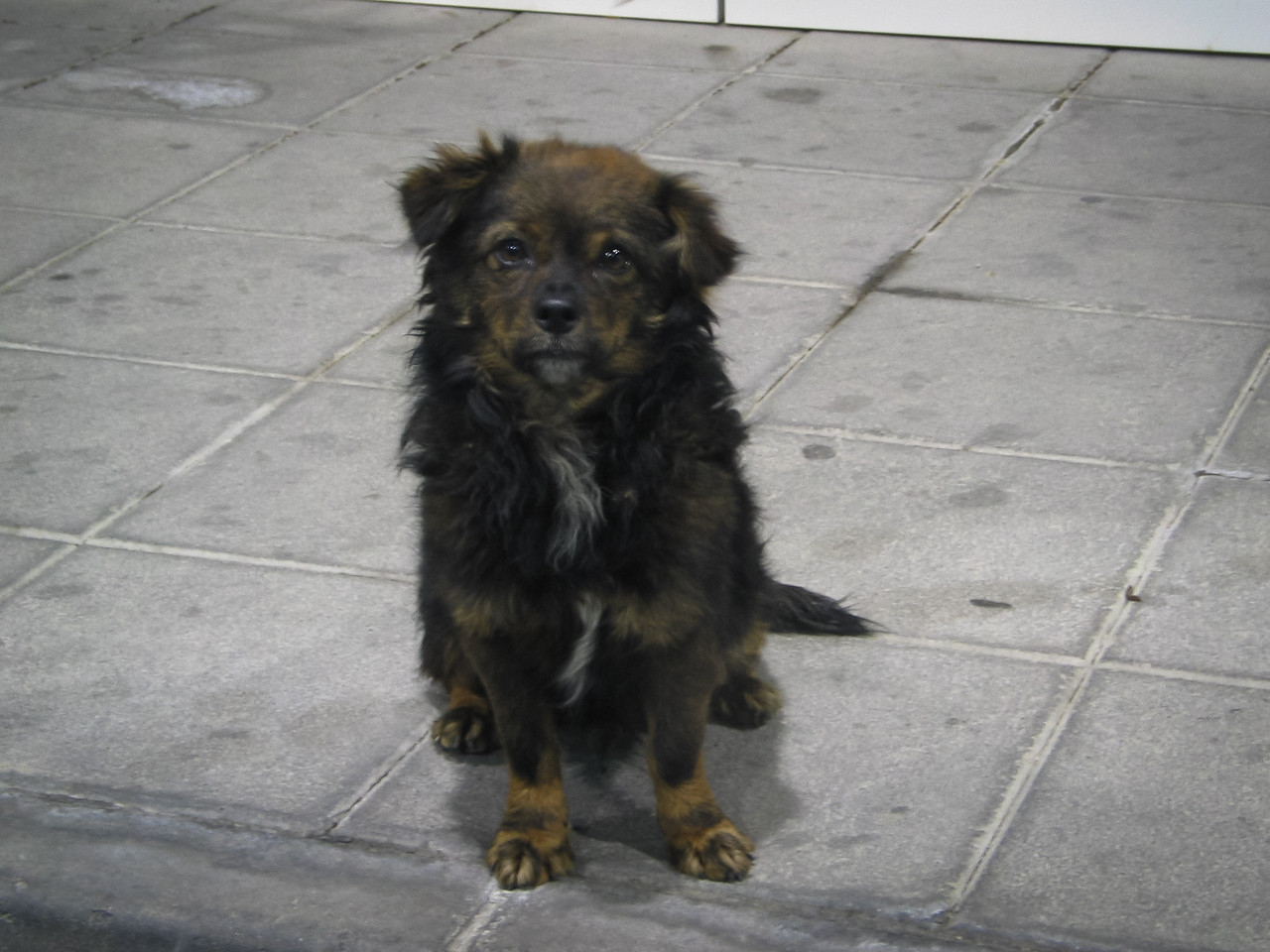 A sweet stray dog at a gas station swallowed sandwich we gave in a fraction of a second (she must have been very hungry) - Granada, Spain, December 2002 (processed and added in 2010)