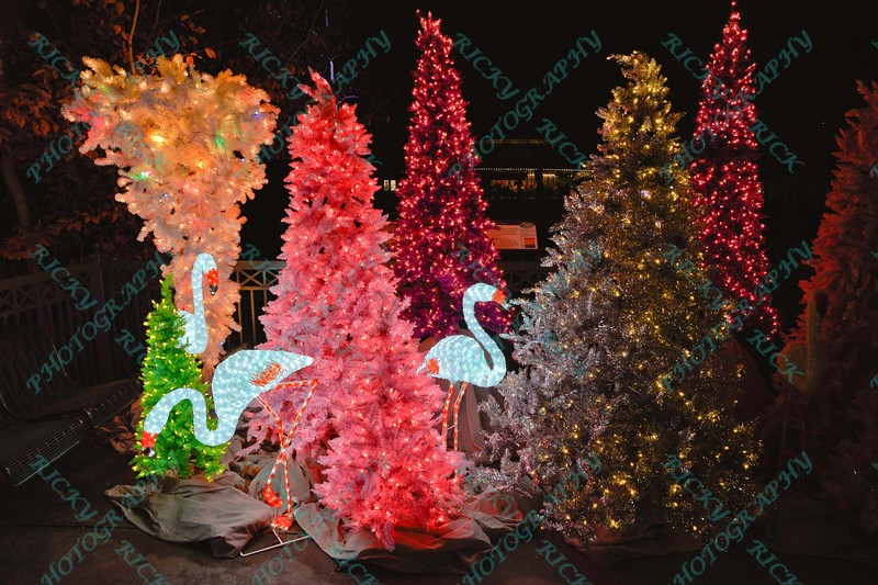 To celebrate the season, the St. Louis Zoo lights up different areas of the zoo giving visitors a chance to enjoy wonderful lighted displays with an animal theme.