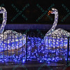 Baby swans welcome visitors  as to celebrate the season, the St. Louis Zoo lights up different areas of the zoo giving visitors a chance to enjoy wonderful lighted displays with an animal theme.